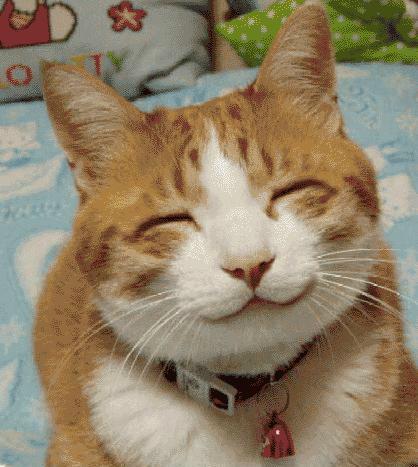 Foto Lucu: Kucing Tersenyum Manis di Depan Kamera Tek